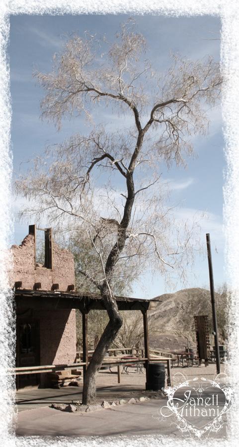 TreeghostW2