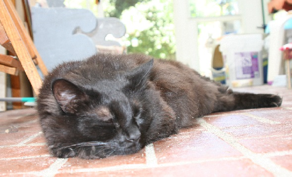 photograph of Button snoozing