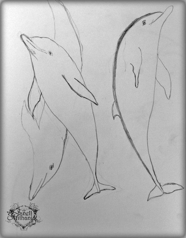Dolphins2W