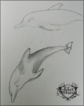 dolphins sketch by Janell Mithani