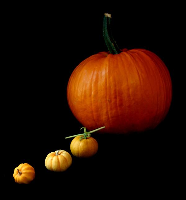 pumpkinparadefb
