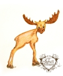 Moose drawing by Janell Mithani