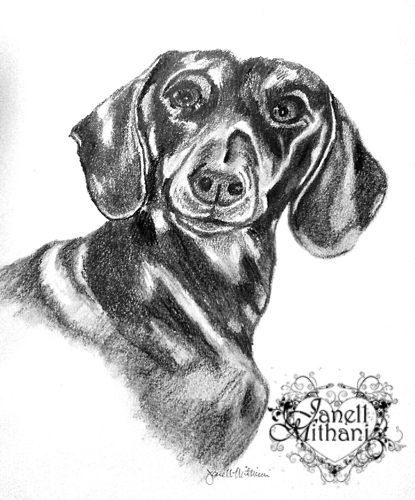 Oscar drawing of dog by Janell Mithani