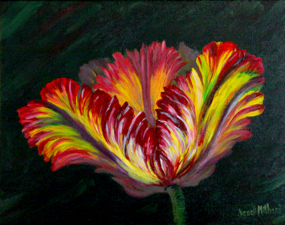 "Rainbow Parrot Tulip, 11: x 14"", acrylic on canvas"