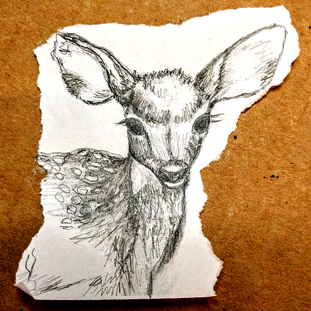 sketch of deer by Janell Mithani